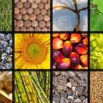 Read more about the article All Crops Chart / اہم فصلوں کی جدید سفارشات کا خلاصہ