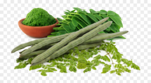 Read more about the article Moringa / مورنگا / سوہانجنا cultivation in Pakistan