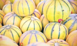 Read more about the article Melon Production in Pakistan / خربوزہ کی کاشت