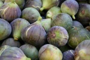 Read more about the article Fig Cultivation / انجیر کی کاشت