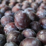 Read more about the article Plum /Alocha /Aloo Bukhara Cultivation