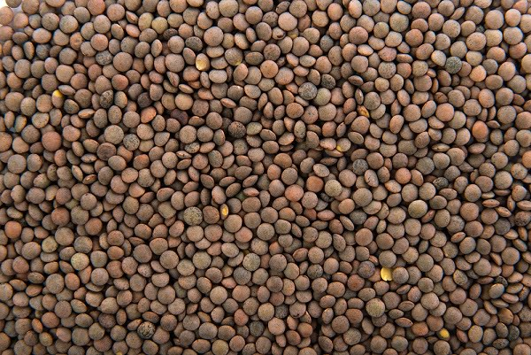 You are currently viewing Lentil Cultivation in Pakistan / مسور کی کاشت