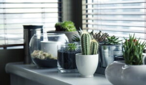 Read more about the article Cactus Plant – کیکٹس