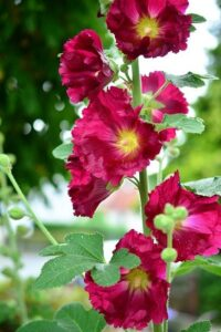 Read more about the article Stock Flower – سٹاک