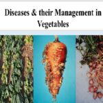 Read more about the article Vegetable Diseases & their Management / سبزیوں کی بیماریاں اور ان کا تدارک