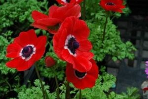 Read more about the article Anemone