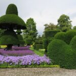 Read more about the article Topiary