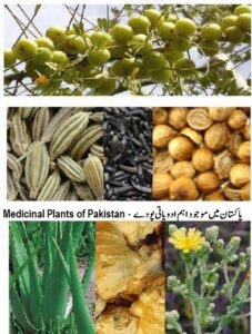 Read more about the article Major Medicinal Plants of Pakistan List –  اہم ادویاتی پودے
