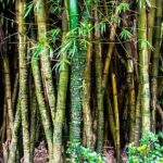 Read more about the article Grow Bamboo meaning in Urdu – بانس کی کاشت